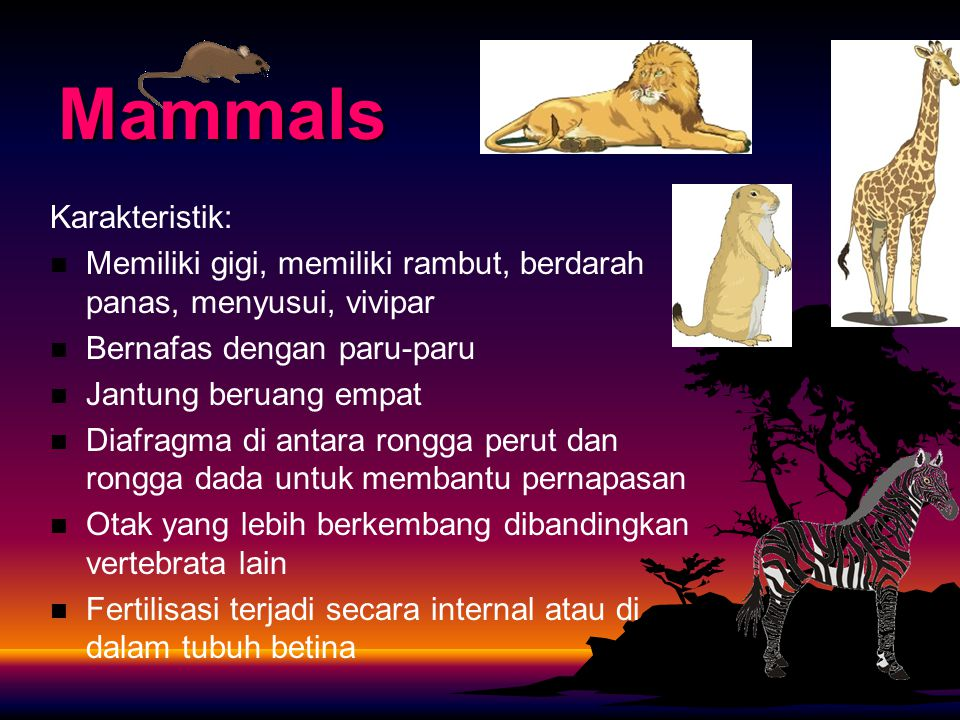 Mammals Karakteristik: Memiliki gigi, memiliki rambut, berdarah panas, menyusui, vivipar Bernafas dengan paru-paru Jantung beruang empat Diafragma di antara rongga perut dan rongga dada untuk membantu pernapasan Otak yang lebih berkembang dibandingkan vertebrata lain Fertilisasi terjadi secara internal atau di dalam tubuh betina
