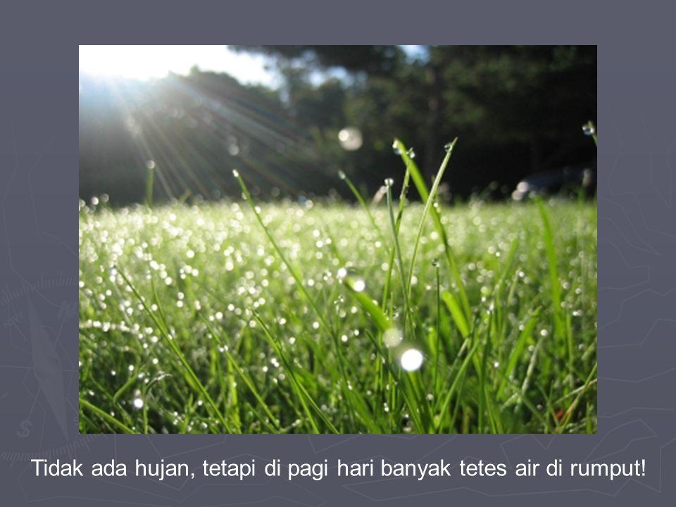 Tidak ada hujan, tetapi di pagi hari banyak tetes air di rumput!