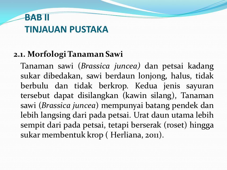 BAB II TINJAUAN PUSTAKA 2.1. Morfologi Tanaman Sawi Tanaman sawi (Brassica juncea) dan petsai kadang sukar dibedakan, sawi berdaun lonjong, halus, tid