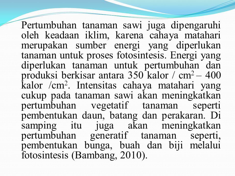 Pertumbuhan tanaman sawi juga dipengaruhi oleh keadaan iklim, karena cahaya matahari merupakan sumber energi yang diperlukan tanaman untuk proses foto