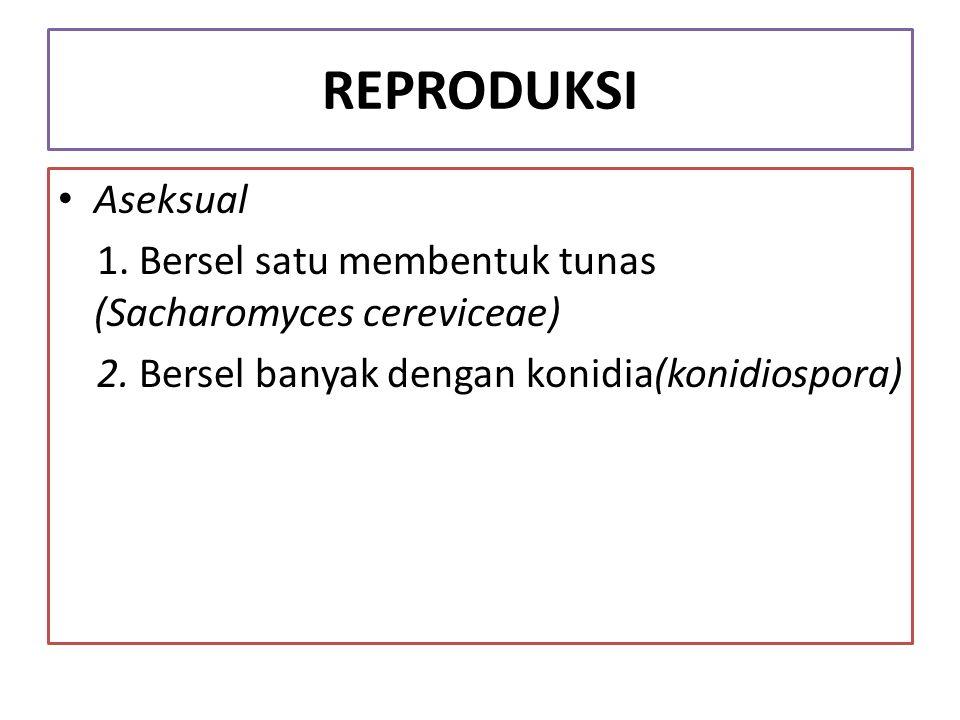 REPRODUKSI Aseksual 1. Bersel satu membentuk tunas (Sacharomyces cereviceae) 2. Bersel banyak dengan konidia(konidiospora)