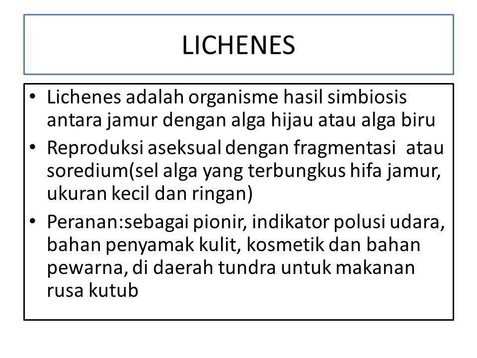 LICHENES Lichenes adalah organisme hasil simbiosis antara jamur dengan alga hijau atau alga biru Reproduksi aseksual dengan fragmentasi atau soredium(