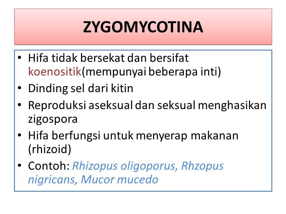 MIKORHIZA Mikorhiza adalah simbiosis antara jamur dengan tumbuhan tingkat tinggi Mempunyai 2 tipe, yaitu: 1.