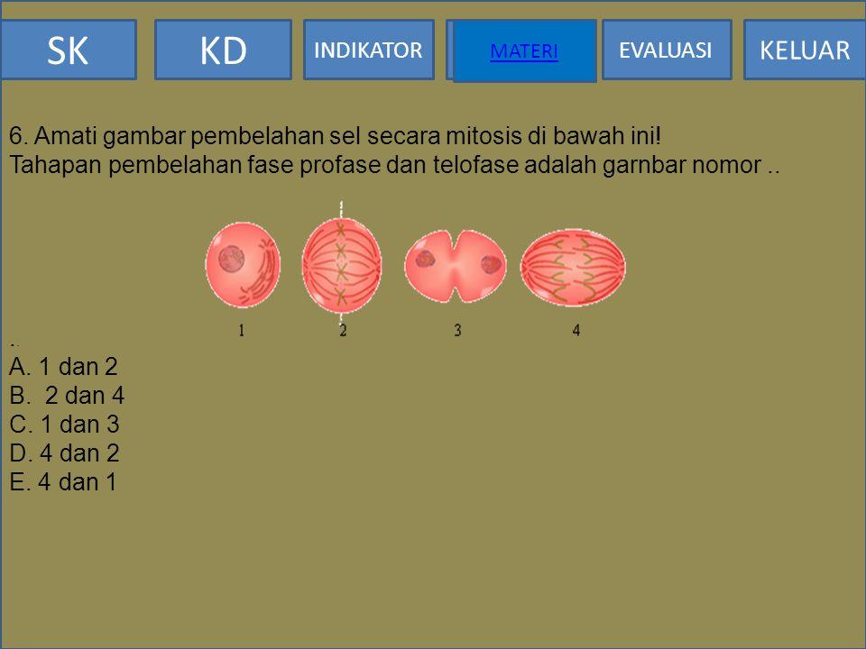 SKKD INDIKATOR MATERI EVALUASI KELUAR MATERI 5. Membran inti lenyap waktu pembelahan sel secara mitosis. Peristiwa ini terjadi pada.... A.. Interfase