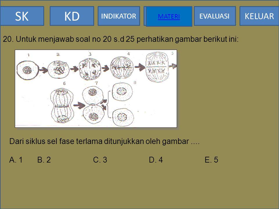 SKKD INDIKATOR MATERI EVALUASI KELUAR MATERI 19. Pernyataan berikut ini yang menggambarkan ciri-ciri anafase I meiosis adalah: A. Sentriol membelah me
