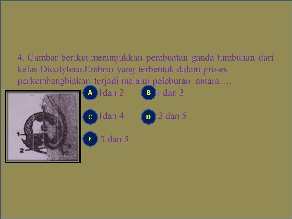 3.Berikut ini adalah ciri- ciri yang ditunjukkan pada saat sel membelah: 1.