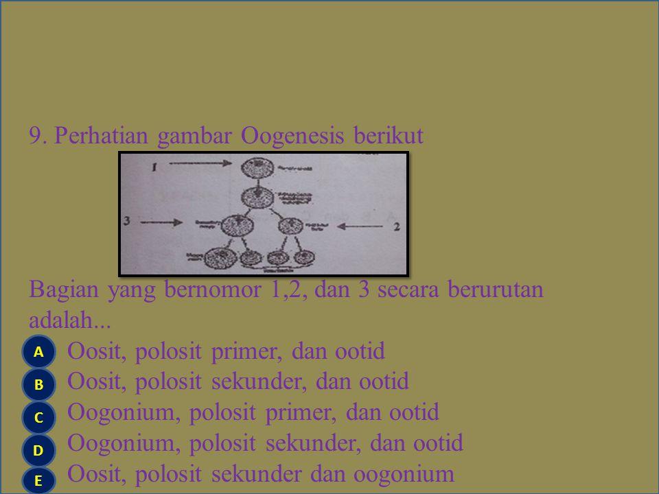 8.Berikut ini beberapa peristiwa dalam siklus sel.
