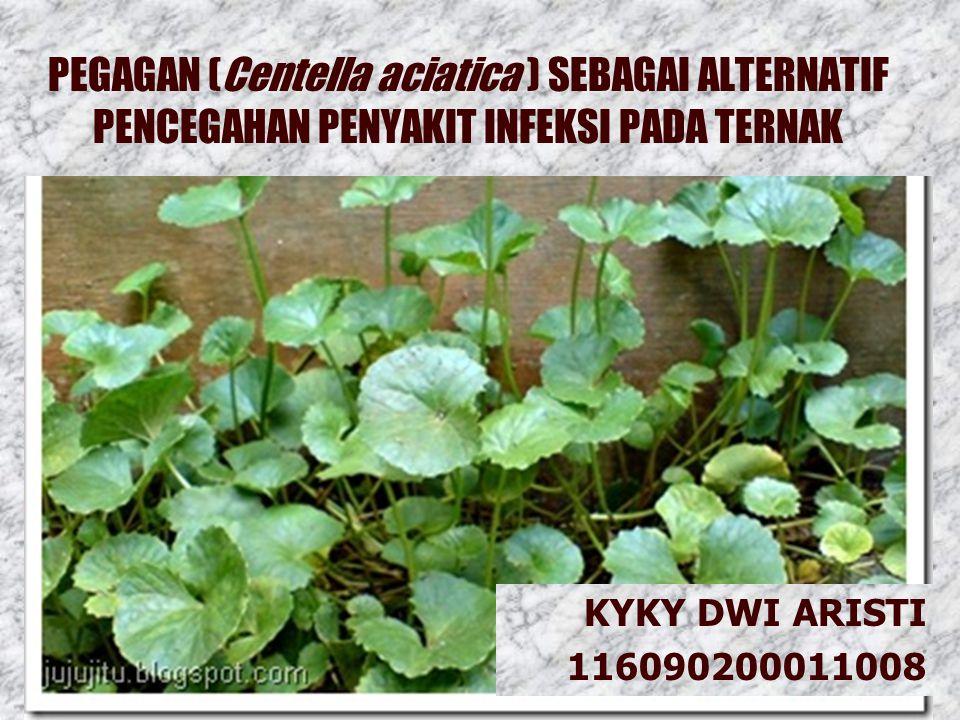 PEGAGAN (Centella aciatica ) SEBAGAI ALTERNATIF PENCEGAHAN PENYAKIT INFEKSI PADA TERNAK KYKY DWI ARISTI 116090200011008