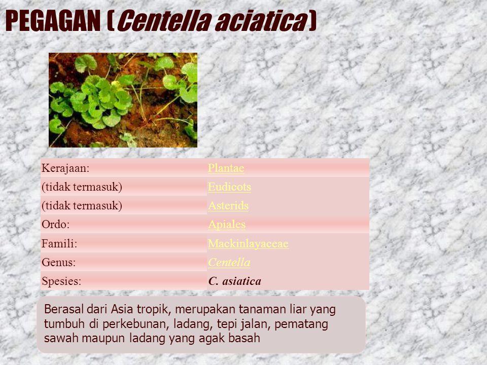 PEGAGAN (Centella aciatica ) Kerajaan:Plantae (tidak termasuk)Eudicots (tidak termasuk)Asterids Ordo:Apiales Famili:Mackinlayaceae Genus:Centella Spesies:C.
