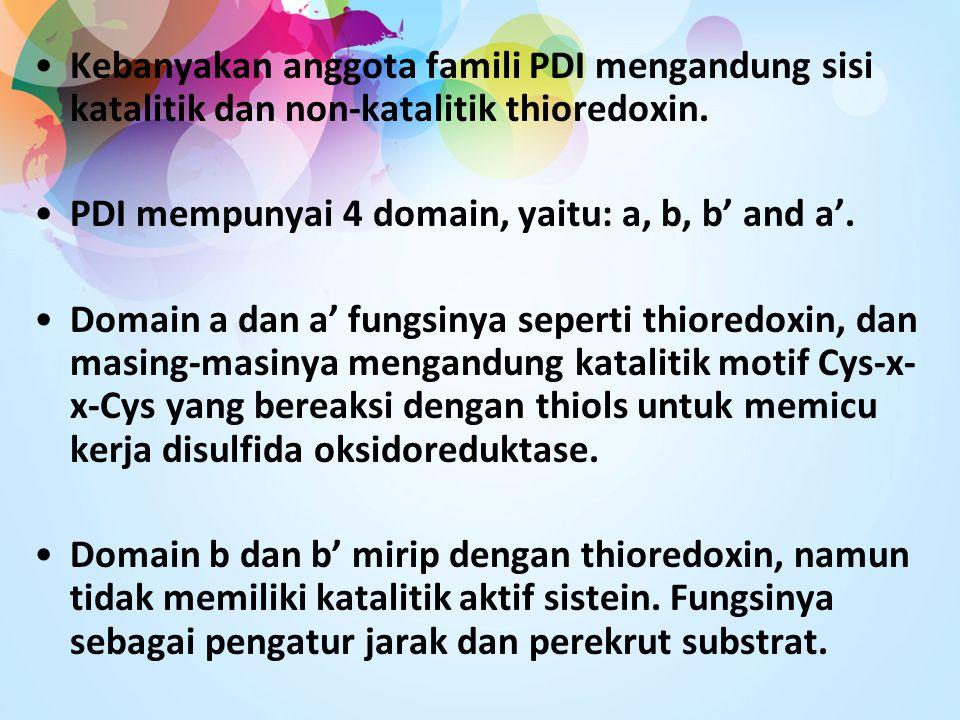 Kebanyakan anggota famili PDI mengandung sisi katalitik dan non-katalitik thioredoxin. PDI mempunyai 4 domain, yaitu: a, b, b' and a'. Domain a dan a'