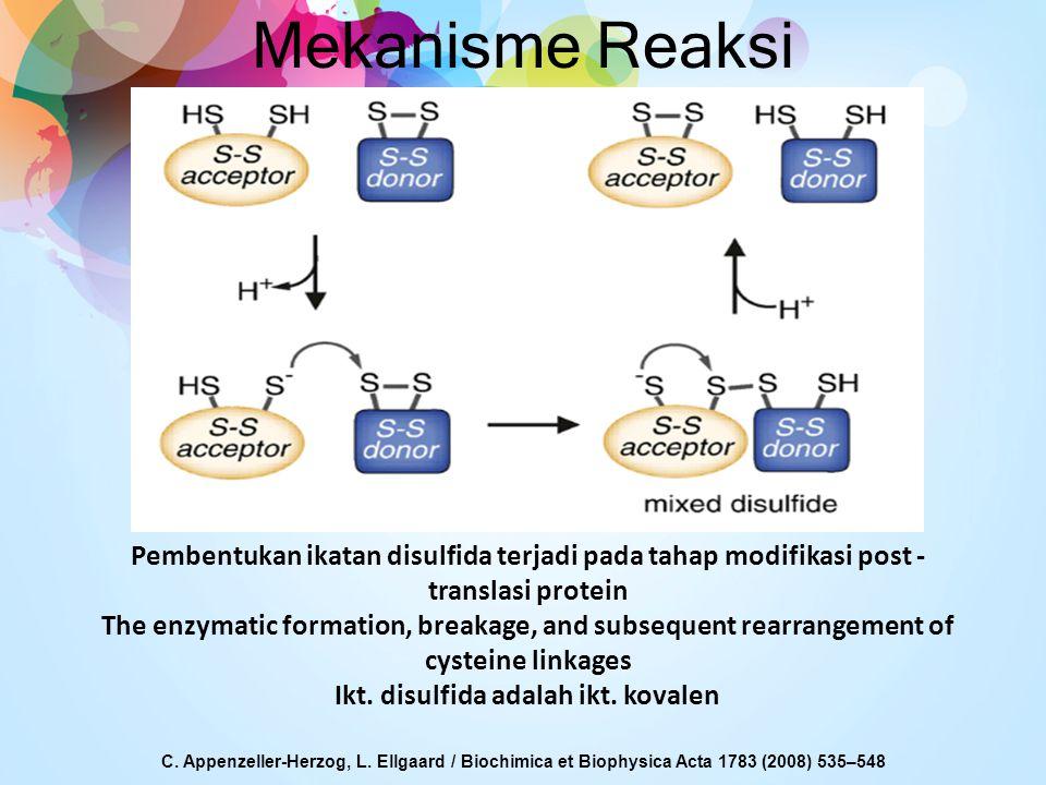 Mekanisme Reaksi C. Appenzeller-Herzog, L. Ellgaard / Biochimica et Biophysica Acta 1783 (2008) 535–548 Pembentukan ikatan disulfida terjadi pada taha