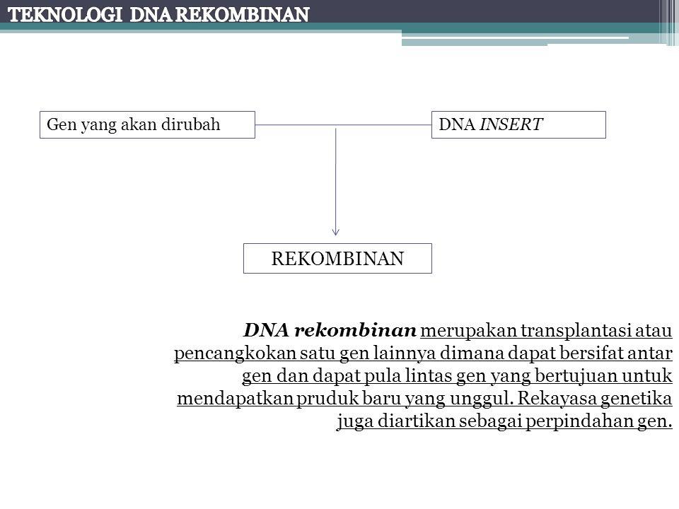 DNA INSERTGen yang akan dirubah REKOMBINAN DNA rekombinan merupakan transplantasi atau pencangkokan satu gen lainnya dimana dapat bersifat antar gen d