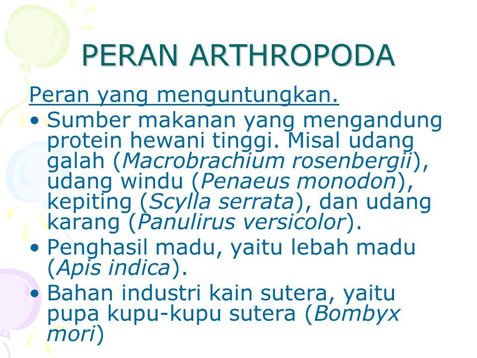 PERAN ARTHROPODA Peran yang menguntungkan. Sumber makanan yang mengandung protein hewani tinggi. Misal udang galah (Macrobrachium rosenbergii), udang