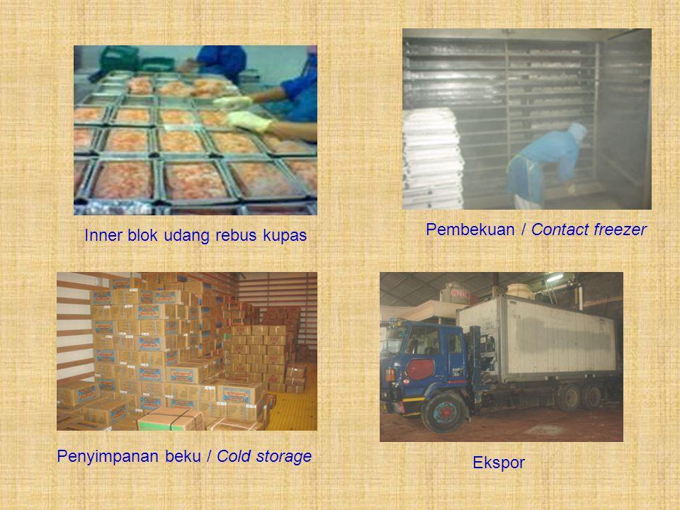 Inner blok udang rebus kupas Pembekuan / Contact freezer Penyimpanan beku / Cold storage Ekspor
