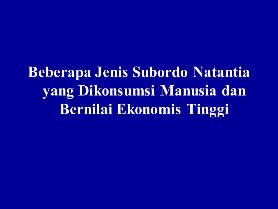 Beberapa Jenis Subordo Natantia yang Dikonsumsi Manusia dan Bernilai Ekonomis Tinggi