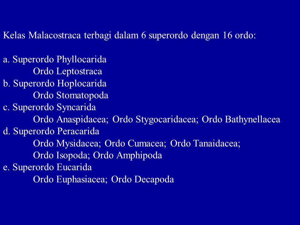 Kelas Malacostraca terbagi dalam 6 superordo dengan 16 ordo: a. Superordo Phyllocarida Ordo Leptostraca b. Superordo Hoplocarida Ordo Stomatopoda c. S