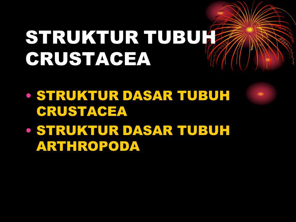 STRUKTUR TUBUH CRUSTACEA STRUKTUR DASAR TUBUH CRUSTACEA STRUKTUR DASAR TUBUH ARTHROPODA