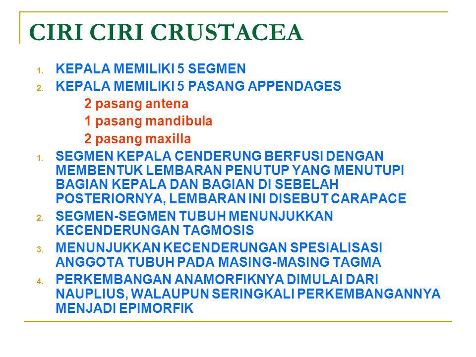 CIRI CIRI CRUSTACEA 1.KEPALA MEMILIKI 5 SEGMEN 2.