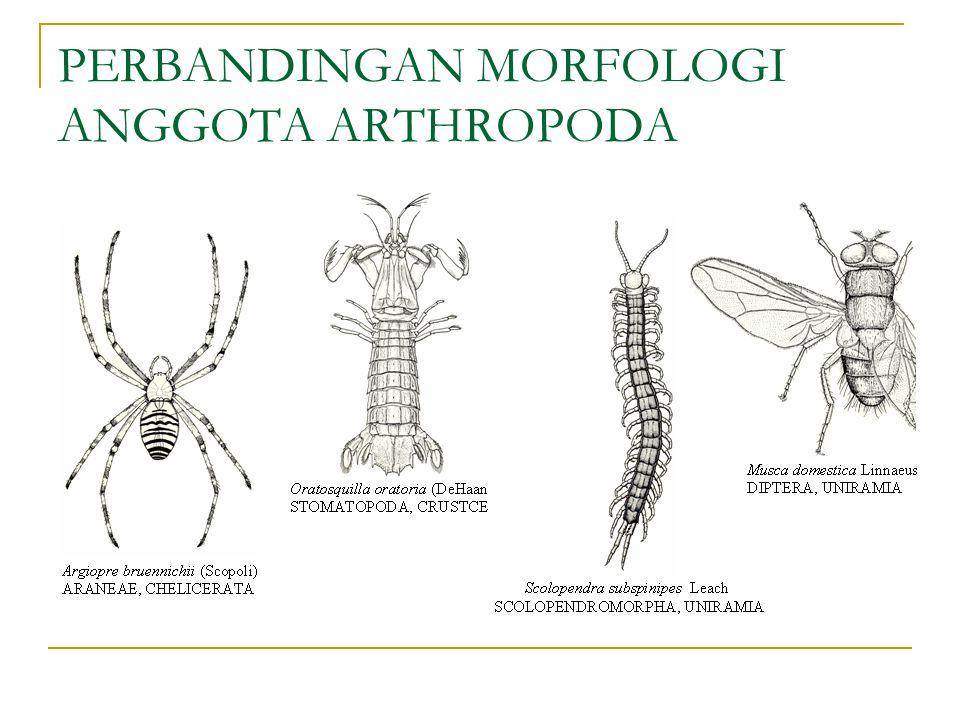 PERBANDINGAN MORFOLOGI ANGGOTA ARTHROPODA