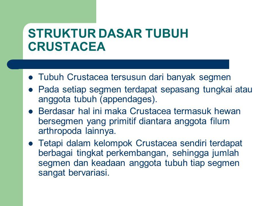 STRUKTUR DASAR TUBUH CRUSTACEA Tubuh Crustacea tersusun dari banyak segmen Pada setiap segmen terdapat sepasang tungkai atau anggota tubuh (appendages).