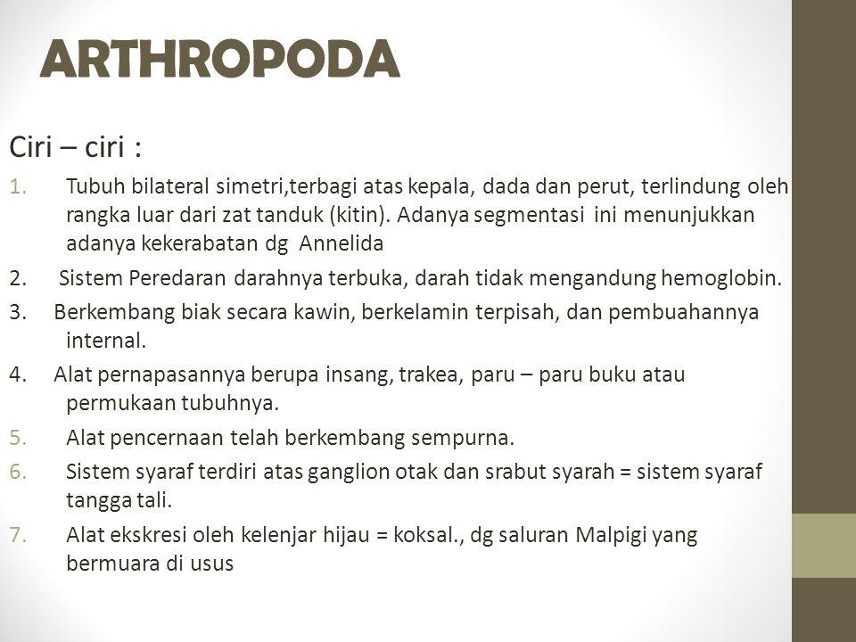 ARTHROPODA Ciri – ciri : 1.Tubuh bilateral simetri,terbagi atas kepala, dada dan perut, terlindung oleh rangka luar dari zat tanduk (kitin).