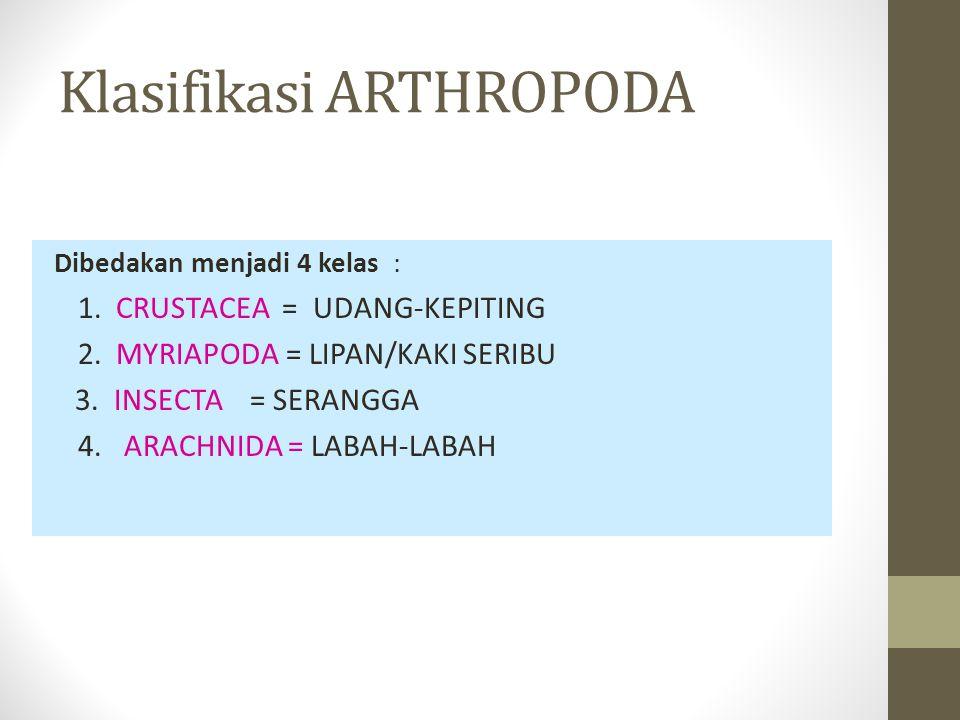 Klasifikasi ARTHROPODA Dibedakan menjadi 4 kelas : 1.