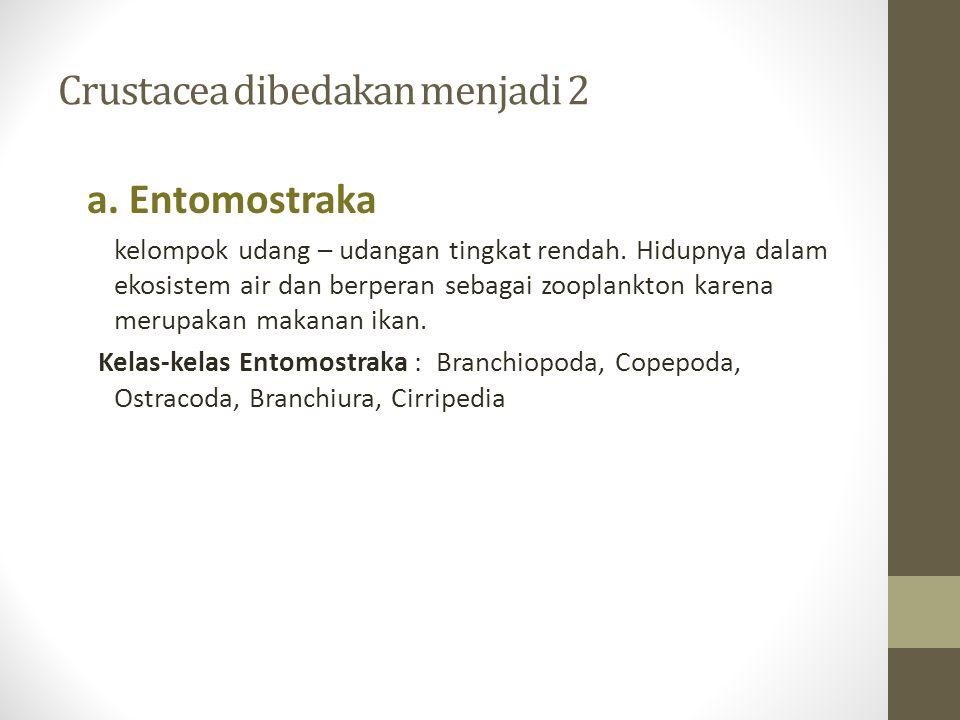 Crustacea dibedakan menjadi 2 a.Entomostraka kelompok udang – udangan tingkat rendah.