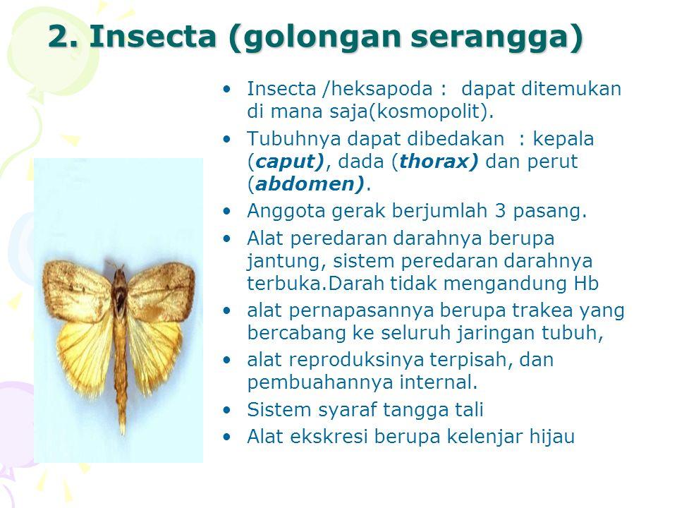 2.Insecta (golongan serangga) Insecta /heksapoda : dapat ditemukan di mana saja(kosmopolit).