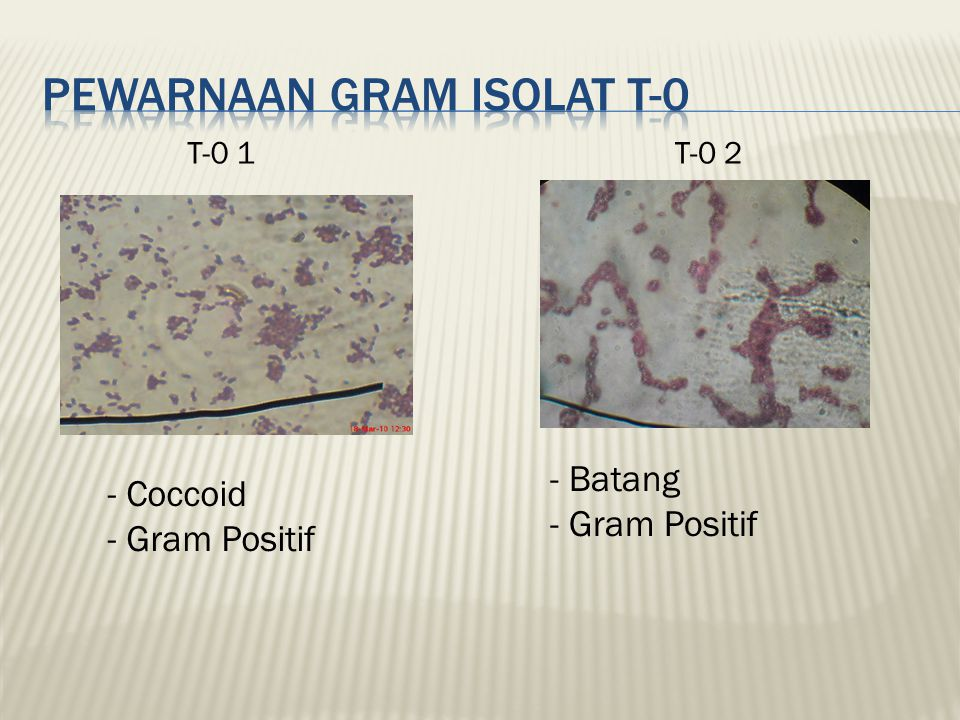 T-1 2 - Diplo-Cocci - Gram Negatif T-1 1 - Coccoid - Gram Negatif