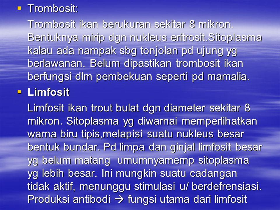  Trombosit: Trombosit ikan berukuran sekitar 8 mikron. Bentuknya mirip dgn nukleus eritrosit.Sitoplasma kalau ada nampak sbg tonjolan pd ujung yg ber