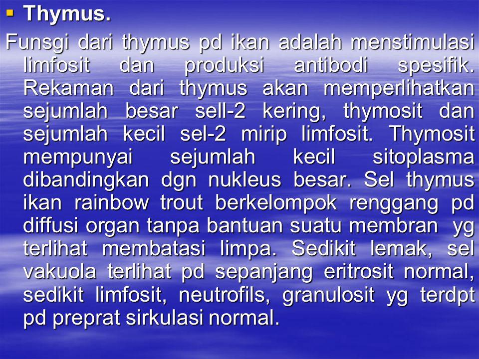  Thymus. Funsgi dari thymus pd ikan adalah menstimulasi limfosit dan produksi antibodi spesifik. Rekaman dari thymus akan memperlihatkan sejumlah bes
