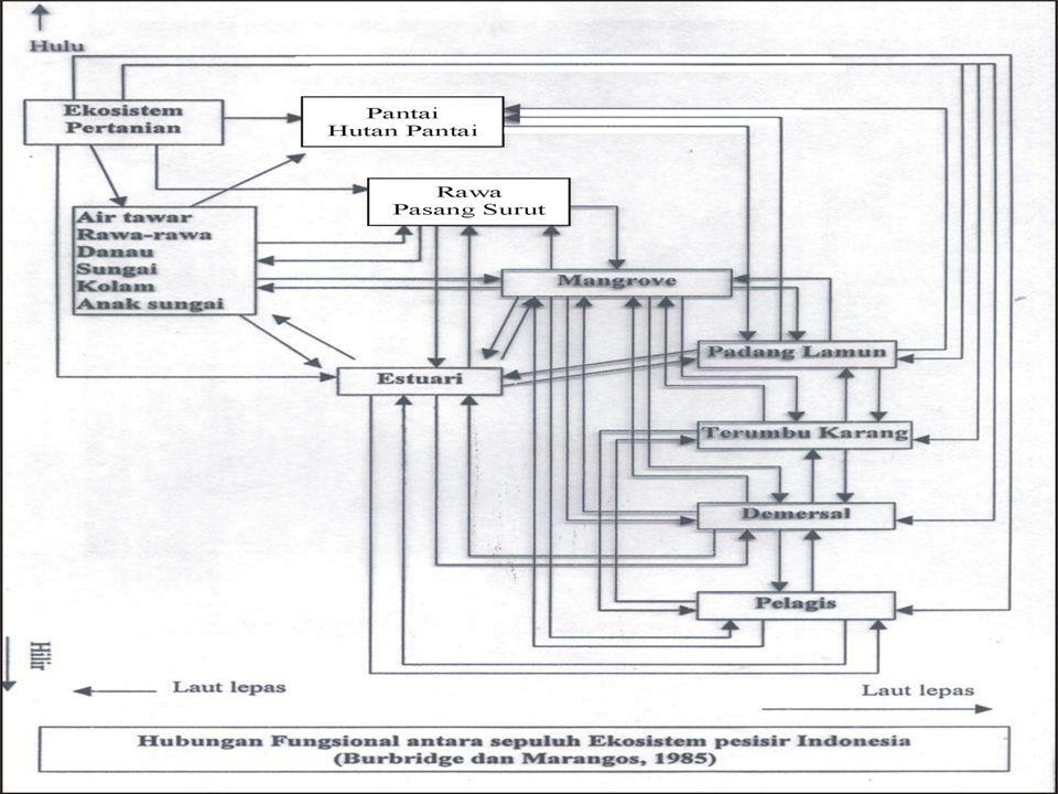 Kondisi lamun di P. Larea-rea kurang baik, kepadatan rendah