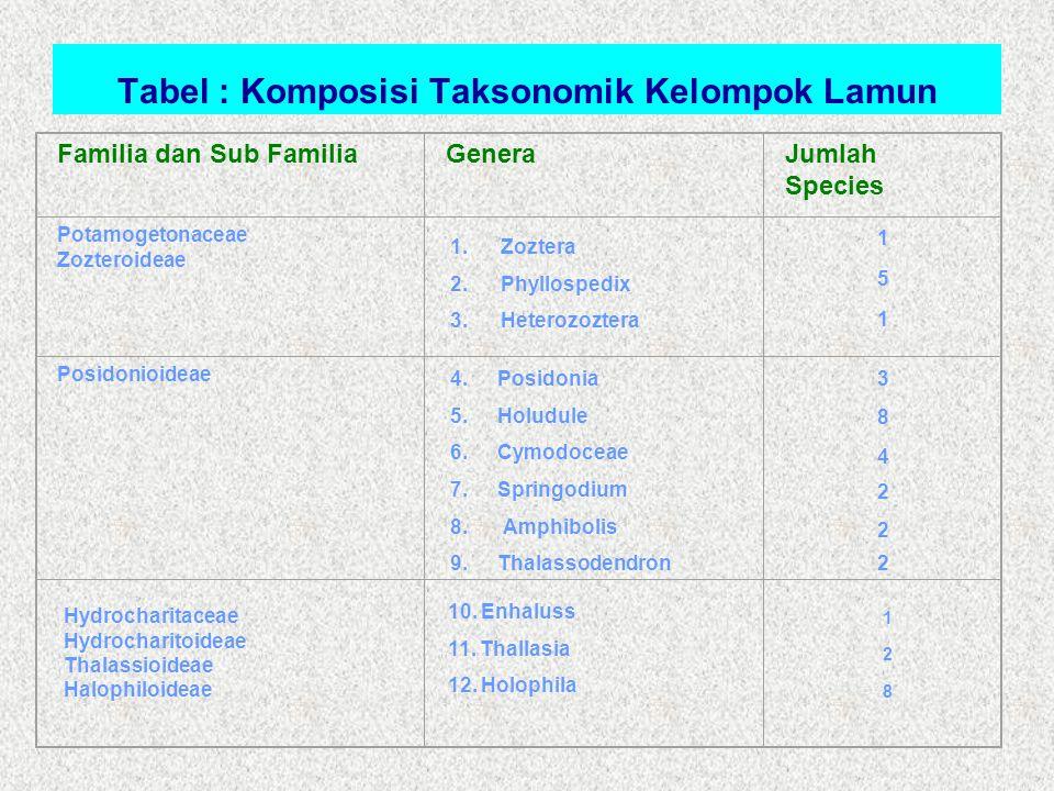 Tabel : Komposisi Taksonomik Kelompok Lamun Familia dan Sub FamiliaGeneraJumlah Species Potamogetonaceae Zozteroideae Posidonioideae 1.