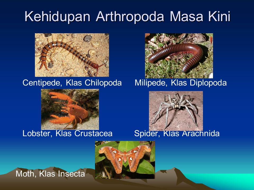 Kehidupan Arthropoda Masa Kini Centipede, Klas Chilopoda Milipede, Klas Diplopoda Lobster, Klas Crustacea Spider, Klas Arachnida Moth, Klas Insecta