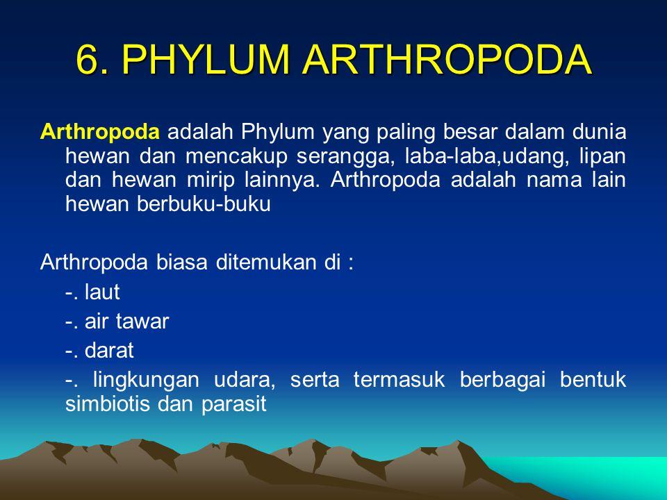 6. PHYLUM ARTHROPODA Arthropoda adalah Phylum yang paling besar dalam dunia hewan dan mencakup serangga, laba-laba,udang, lipan dan hewan mirip lainny