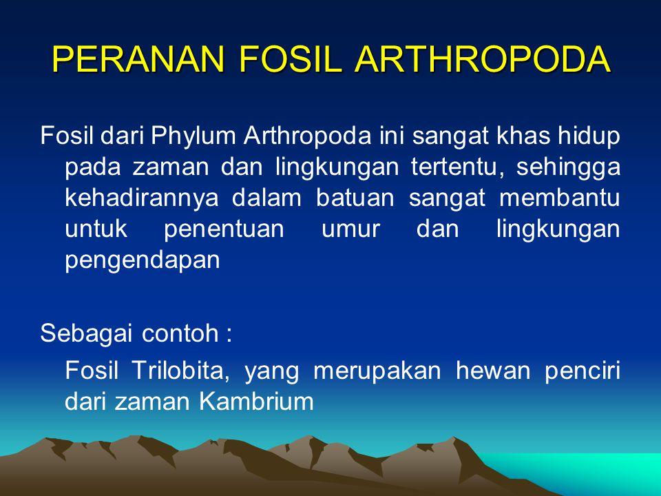 PERANAN FOSIL ARTHROPODA Fosil dari Phylum Arthropoda ini sangat khas hidup pada zaman dan lingkungan tertentu, sehingga kehadirannya dalam batuan sangat membantu untuk penentuan umur dan lingkungan pengendapan Sebagai contoh : Fosil Trilobita, yang merupakan hewan penciri dari zaman Kambrium