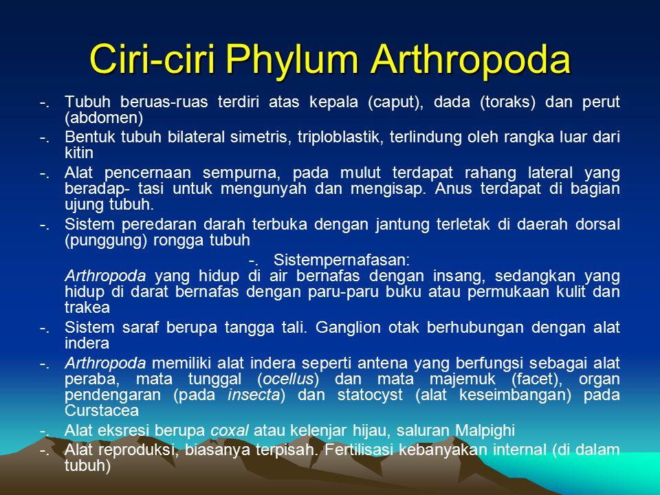 Ciri-ciri Phylum Arthropoda -.Tubuh beruas-ruas terdiri atas kepala (caput), dada (toraks) dan perut (abdomen) -.Bentuk tubuh bilateral simetris, trip