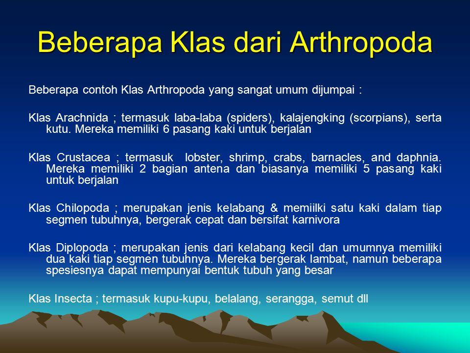 FOSIL ARTHROPODA