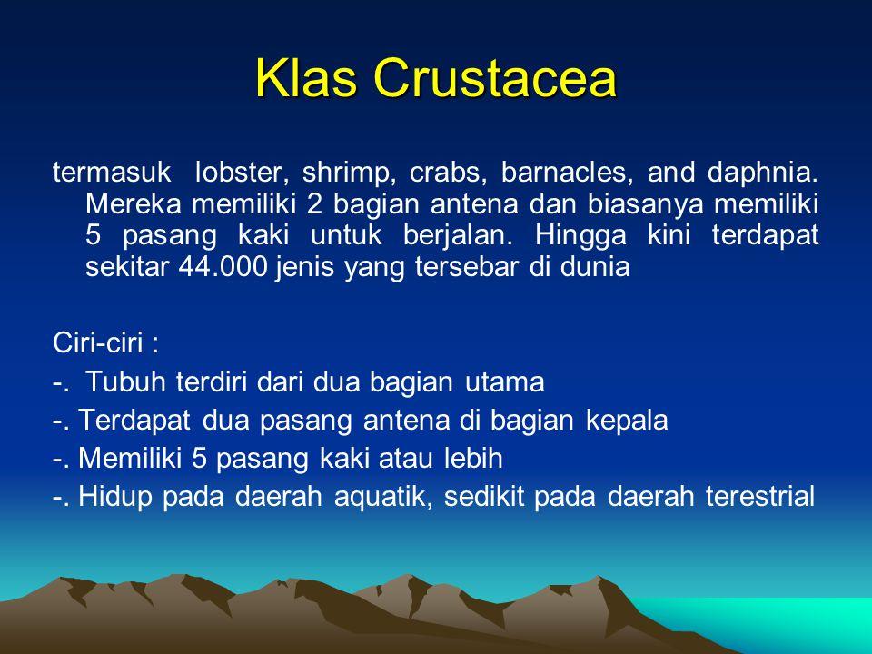 Klas Crustacea termasuk lobster, shrimp, crabs, barnacles, and daphnia. Mereka memiliki 2 bagian antena dan biasanya memiliki 5 pasang kaki untuk berj