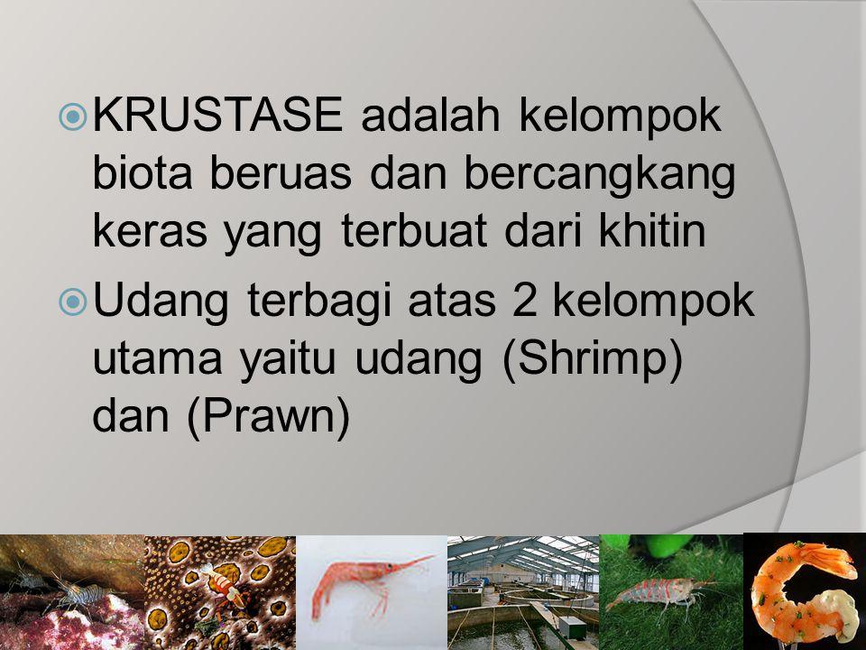  KRUSTASE adalah kelompok biota beruas dan bercangkang keras yang terbuat dari khitin  Udang terbagi atas 2 kelompok utama yaitu udang (Shrimp) dan