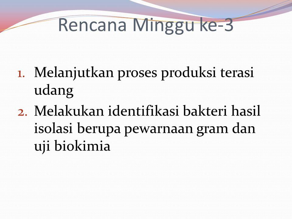 Rencana Minggu ke-3 1. Melanjutkan proses produksi terasi udang 2. Melakukan identifikasi bakteri hasil isolasi berupa pewarnaan gram dan uji biokimia
