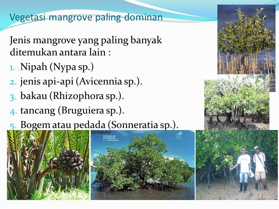 Vegetasi mangrove paling dominan Jenis mangrove yang paling banyak ditemukan antara lain : 1. Nipah (Nypa sp.) 2. jenis api-api (Avicennia sp.). 3. ba