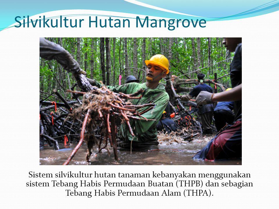 Silvikultur Hutan Mangrove Sistem silvikultur hutan tanaman kebanyakan menggunakan sistem Tebang Habis Permudaan Buatan (THPB) dan sebagian Tebang Hab
