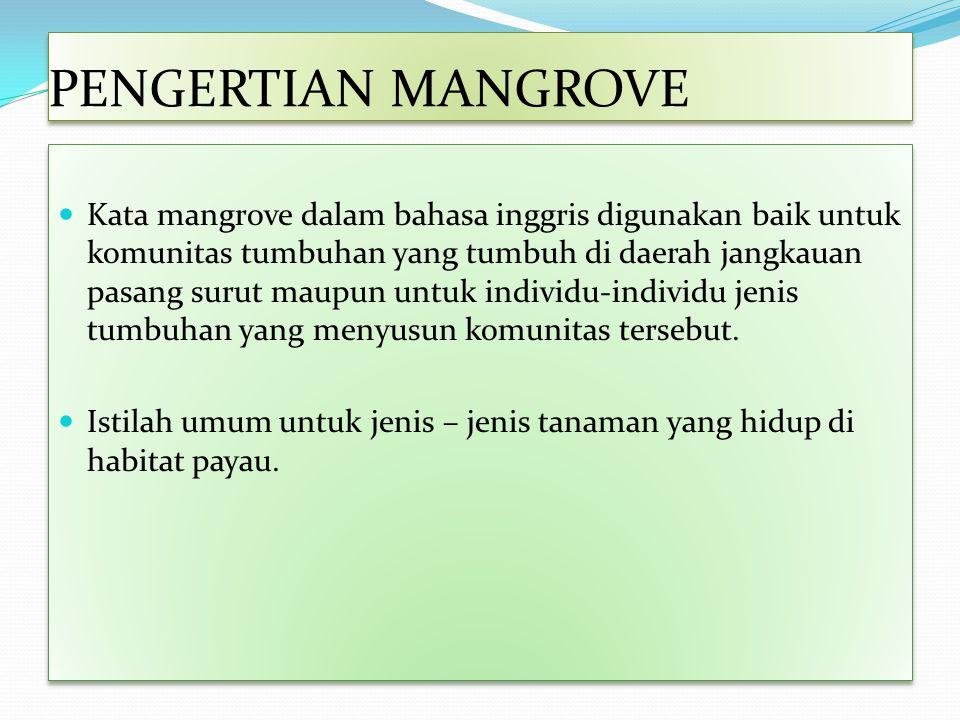 PENGERTIAN MANGROVE Kata mangrove dalam bahasa inggris digunakan baik untuk komunitas tumbuhan yang tumbuh di daerah jangkauan pasang surut maupun unt