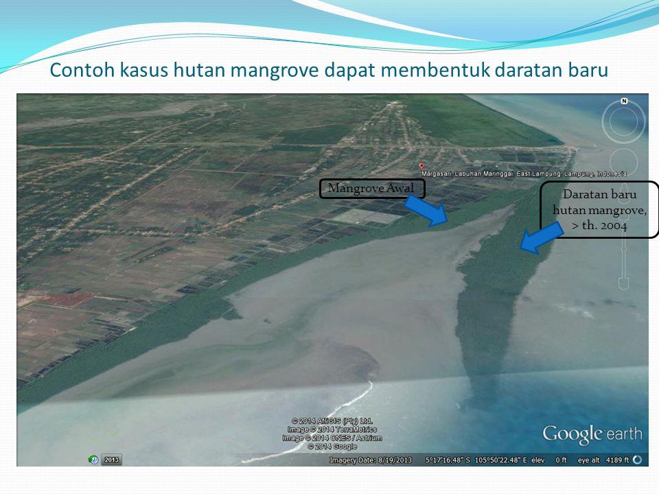 Contoh kasus hutan mangrove dapat membentuk daratan baru Mangrove Awal Daratan baru hutan mangrove, > th. 2004