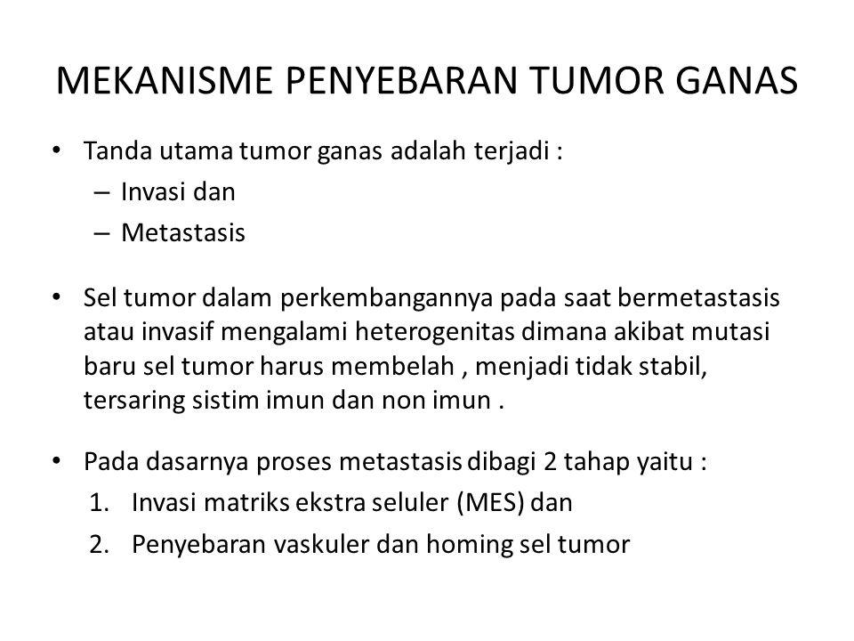 MEKANISME PENYEBARAN TUMOR GANAS Tanda utama tumor ganas adalah terjadi : – Invasi dan – Metastasis Sel tumor dalam perkembangannya pada saat bermetas