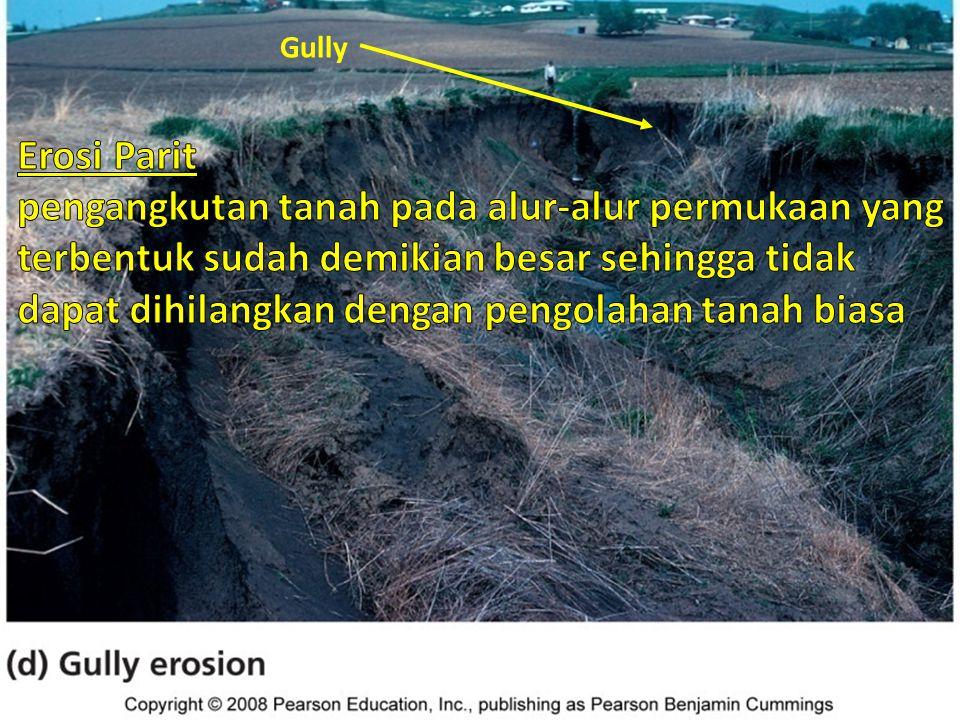 Macam erosi tanah Gully