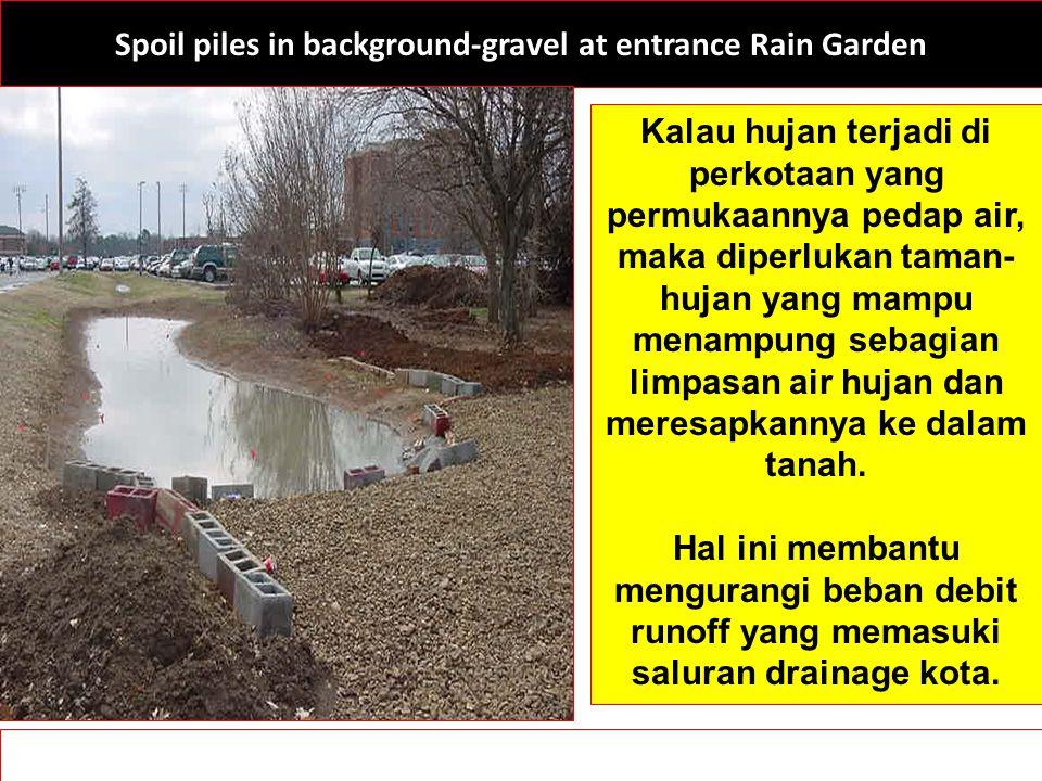 Spoil piles in background-gravel at entrance Rain Garden Kalau hujan terjadi di perkotaan yang permukaannya pedap air, maka diperlukan taman- hujan ya