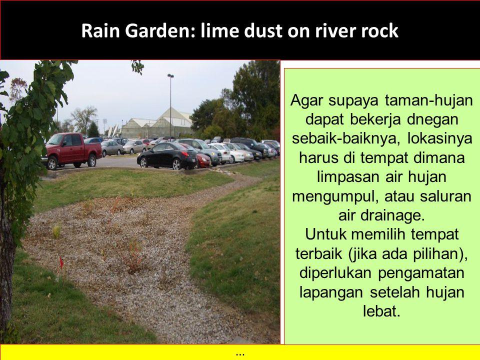 Rain Garden: lime dust on river rock … Agar supaya taman-hujan dapat bekerja dnegan sebaik-baiknya, lokasinya harus di tempat dimana limpasan air hujan mengumpul, atau saluran air drainage.