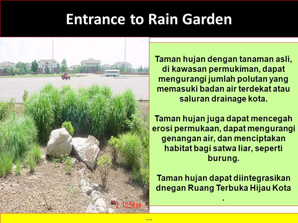 Entrance to Rain Garden … Taman hujan dengan tanaman asli, di kawasan permukiman, dapat mengurangi jumlah polutan yang memasuki badan air terdekat atau saluran drainage kota.